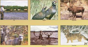 personalized wildlife calendars