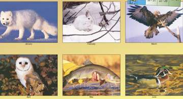wholesale wildlife calendars